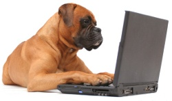 Contact Us - Animal Behavior Specialists Inc
